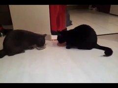 Thumbnail of 2 Cats 1 Bowl