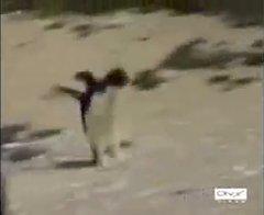 Thumbnail of Hardcore Penguin