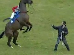 Thumbnail of Horse does backflip