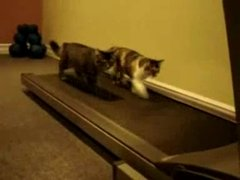 Thumbnail of Two cats on a treadmill
