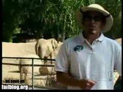 Thumbnail of Elephant Handler Fail