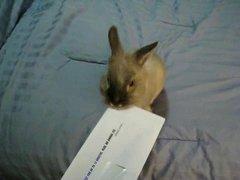 Thumbnail of Bunny letter opener