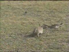 Thumbnail of Rabbit and a snake
