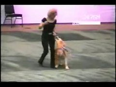 Thumbnail of Intelligent dog