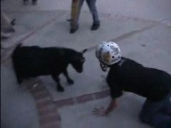 Thumbnail of Guy with helmet vs. goat