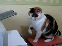 Thumbnail of Cat vs printer