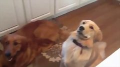 Thumbnail of Dogs Who Fail At Being Dogs