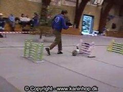 Thumbnail of Bunny show jumping