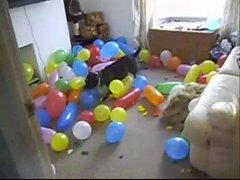 Thumbnail of Dog vs. 150 balloons