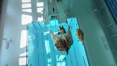 Thumbnail of High Diving Giraffes