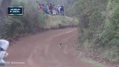 Thumbnail of The luckiest dog alive