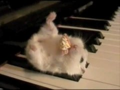 Thumbnail of Hamster On A Piano (Eating Popcorn)