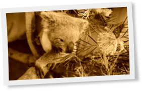 Thumbnail of Butterfly takes over Koala Joey's Photoshoot and owns it like a BOSS!