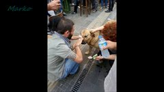 Thumbnail of 100 photos to restore your faith in humanity
