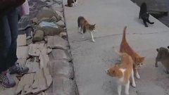 Thumbnail of Japan's Cat Island