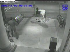 Thumbnail of Two drunks try to mount horse sculpture