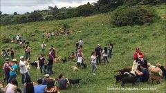 Thumbnail of 'Land of the Strays' Territorio de Zaguates - Costa Rica