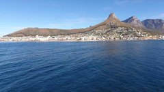 Thumbnail of Pod of 60 Humpback Whales in Cape Town