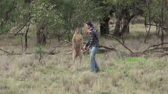 Thumbnail of Man punches a kangaroo in the face to rescue his dog