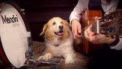 Thumbnail of Dog has rhythm and plays drum!