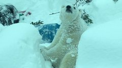 Thumbnail of Snow day at the Oregon Zoo