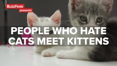 Thumbnail of People Who Hate Cats Meet Kittens