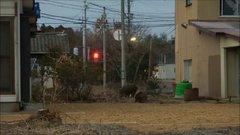 Thumbnail of Fukushima-hit towns scramble to clear out wild boars