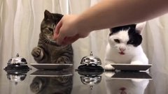Thumbnail of Just Two Hungry Cats Politely Requesting More Food By Ringing Call Bell