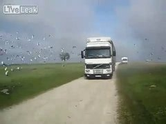 Thumbnail of Thousands of Birds Flying Out of Truck