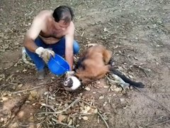Thumbnail of Man Gives Water to Dehydrated Wolf
