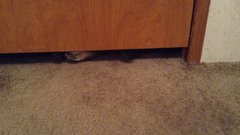 Thumbnail of Fat Cute Cat Going Under Door