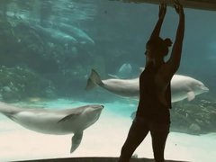 Thumbnail of Girl Makes Dolphin Laugh