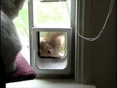 "Thumbnail of Squirrel tries to get in cat door, cat says ""no!"""