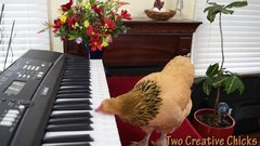 Thumbnail of Chicken Plays Operatic Aria on Piano Keyboard