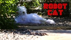 Thumbnail of Cats React to Robot Cat