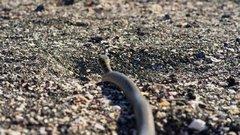 Thumbnail of Iguana vs Snakes - Planet Earth II