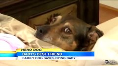 Thumbnail of Rescue Dog Duke Saves Dying Baby