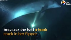 Thumbnail of Dolphin Asks Diver For Help