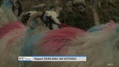 Thumbnail of Irish Farmers Lose Their Sheep, Strange Accent