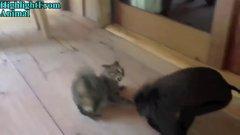 Thumbnail of Monkeys v Cat & Dogs