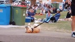Thumbnail of 'I think your dog is broken!'