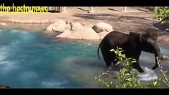Thumbnail of Sassy goose doesn't back down when intimidated by elephant in zoo