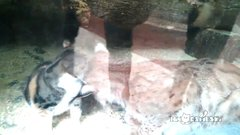 Thumbnail of The awesome friends in St. Petersburg Zoo