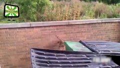 Thumbnail of Funny Raccoons
