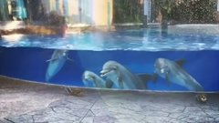 Thumbnail of Baby dolphins fascinated by squirrels