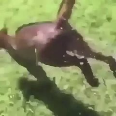 Thumbnail of Cat jumps into lake after guy sneezes