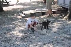 Thumbnail of Pet Cat Saves Boy from Two Vicious GATORS -Cat vs Gator