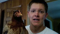 Thumbnail of Chicken head tracking