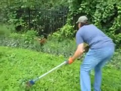 Thumbnail of baby deer rescued from gated community fence in Michigan