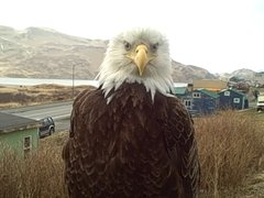 Thumbnail of Mrs Eagle Up Close & Personal